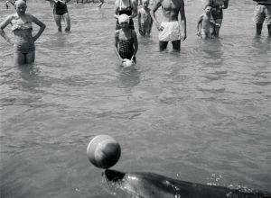 Opo the dolphin and admirers, Opononi, 1956 (Te Papa, F.005006/02)